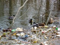 Ducks and Debris