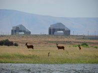 Image of Hanford nuclear containment facilities with deer and water